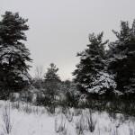 Neige chambrefaite 28-12-14 10