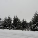Neige chambrefaite 28-12-14 12