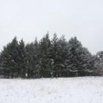 Neige chambrefaite 28-12-14 2